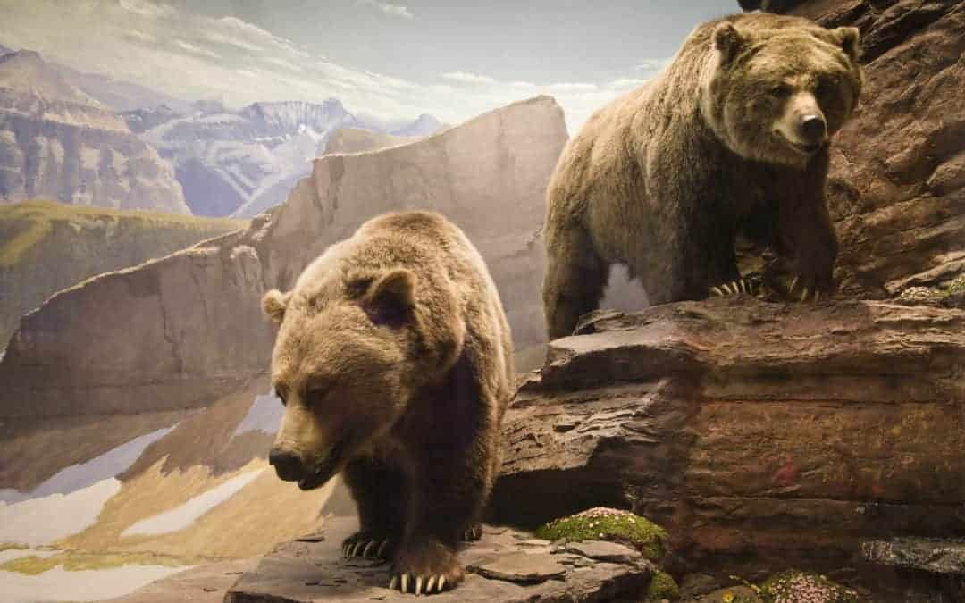 4 Ways to Invest in Stocks in a Bear Market