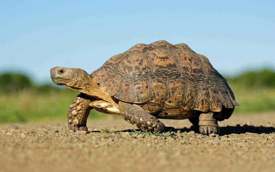Tortoise Acquisition 2 (SNPR SPAC)